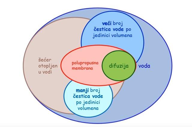 Konceptualni krugovi – Prijenos tvari kroz staničnu membranu